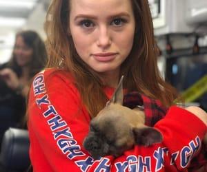 puppy, frenchbulldog, and riverdale image
