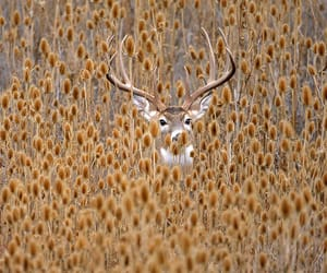deer, nature, and autumn image