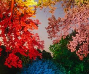bright, colored, and multicolour image