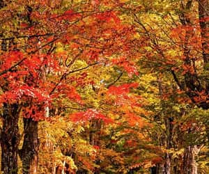 autumn colors, country road, and facebook image