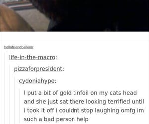 cats, english, and funny image