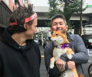dog, Harry Styles, and louis tomlinson image