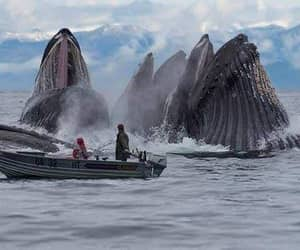 whale, ocean, and nature image