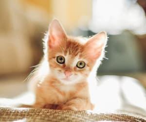 adorable, good, and small image