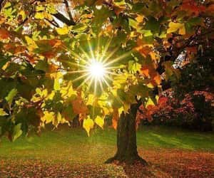 autumn, nature, and sun image