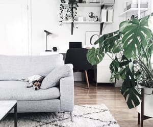 carpet, plants, and room image
