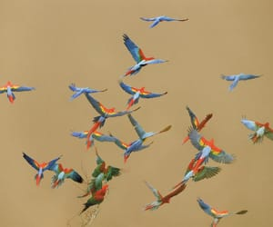 birds and parrots image