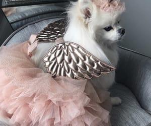 angel, dog, and animal image