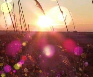 sunlight, sunset, and fucshia image