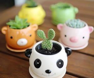 cactus, hogar, and inspiracion image