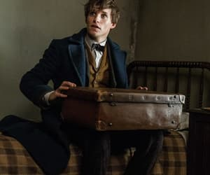 harry potter, fantastic beasts, and newt scamender image