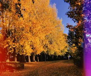 autumn, germany, and love image