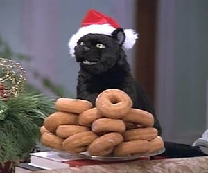 cat, salem, and donuts image