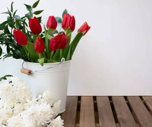 red, red flowers, and احمر image