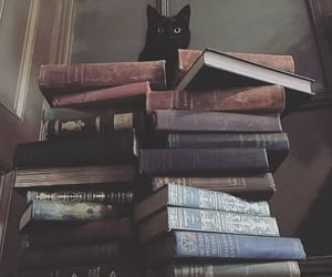 book, cat, and kitty image