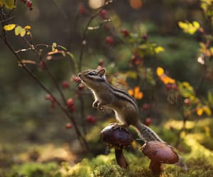 autumn, chipmunk, and fall image