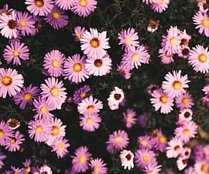 aesthetic, fondos, and flowers image