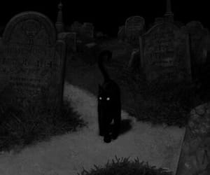 cat, cemetery, and black image