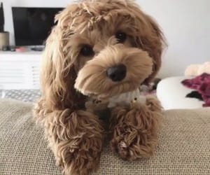 cuties, dogs, and puppies image