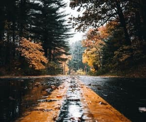 aesthetic, black, and forest image