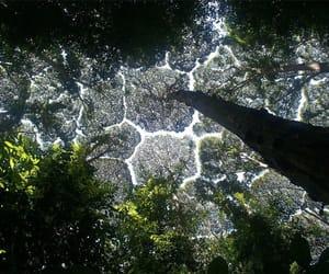 arbol, nature, and tree image