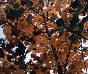 autumn, Halloween, and Herbst image