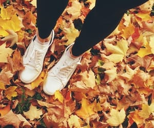 leaves, shoes, and autumn leaves image