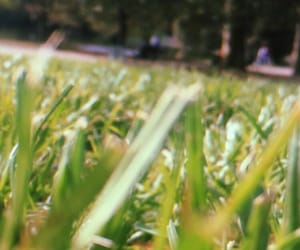 aesthetic, herbe, and nature image