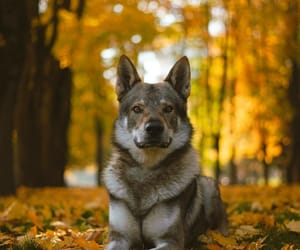 animal, autumn, and colors image