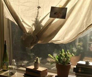 tumblr, home, and plants image