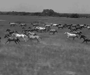 gif, wild horses, and home on the range image