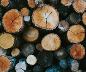 wood, fall, and autumn image
