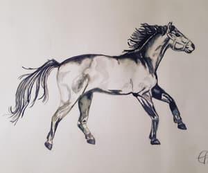 aquarell, drawing, and horse image