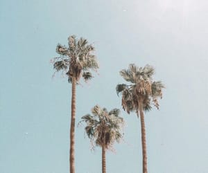 palm trees, summer, and travel image