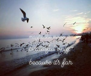 birds, moon, and quotes image