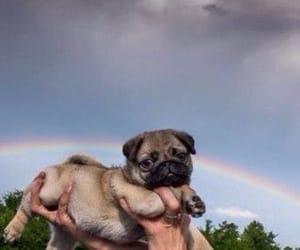 animal, dog, and rainbow image
