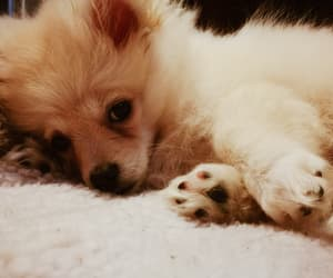 baby, fluffy, and dog image