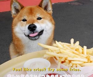 doge, quotes, and food image