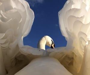 Swan and beautiful image