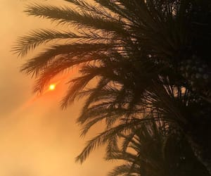 palm trees, sunset, and sun image