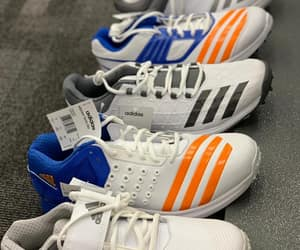 adidas-cricket-shoes and payntr-shoes image