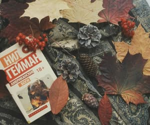 autumn, books, and photography image
