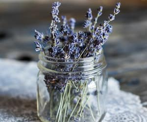 aesthetic, lavender, and purple image