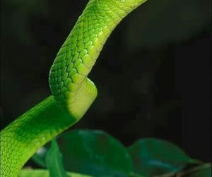 Dream and snake image
