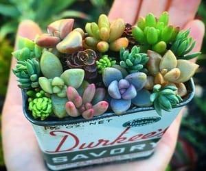 plantas and suculentas image