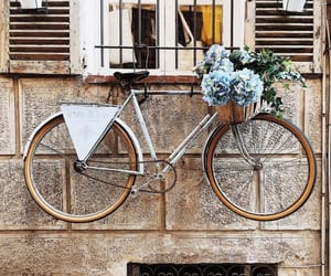 bicycle, cool, and florals image