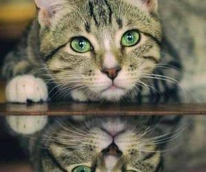Animales, mirada, and felino image
