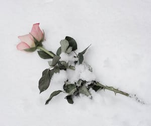flowers, photography, and snow image