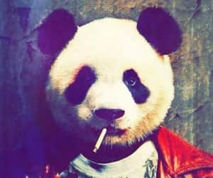 panda, smoke, and smoking image