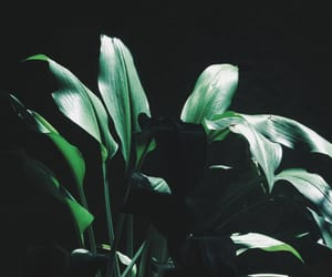 aesthetic, green, and plant image